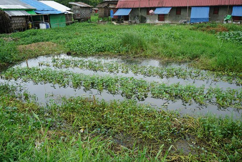 スラムの畑