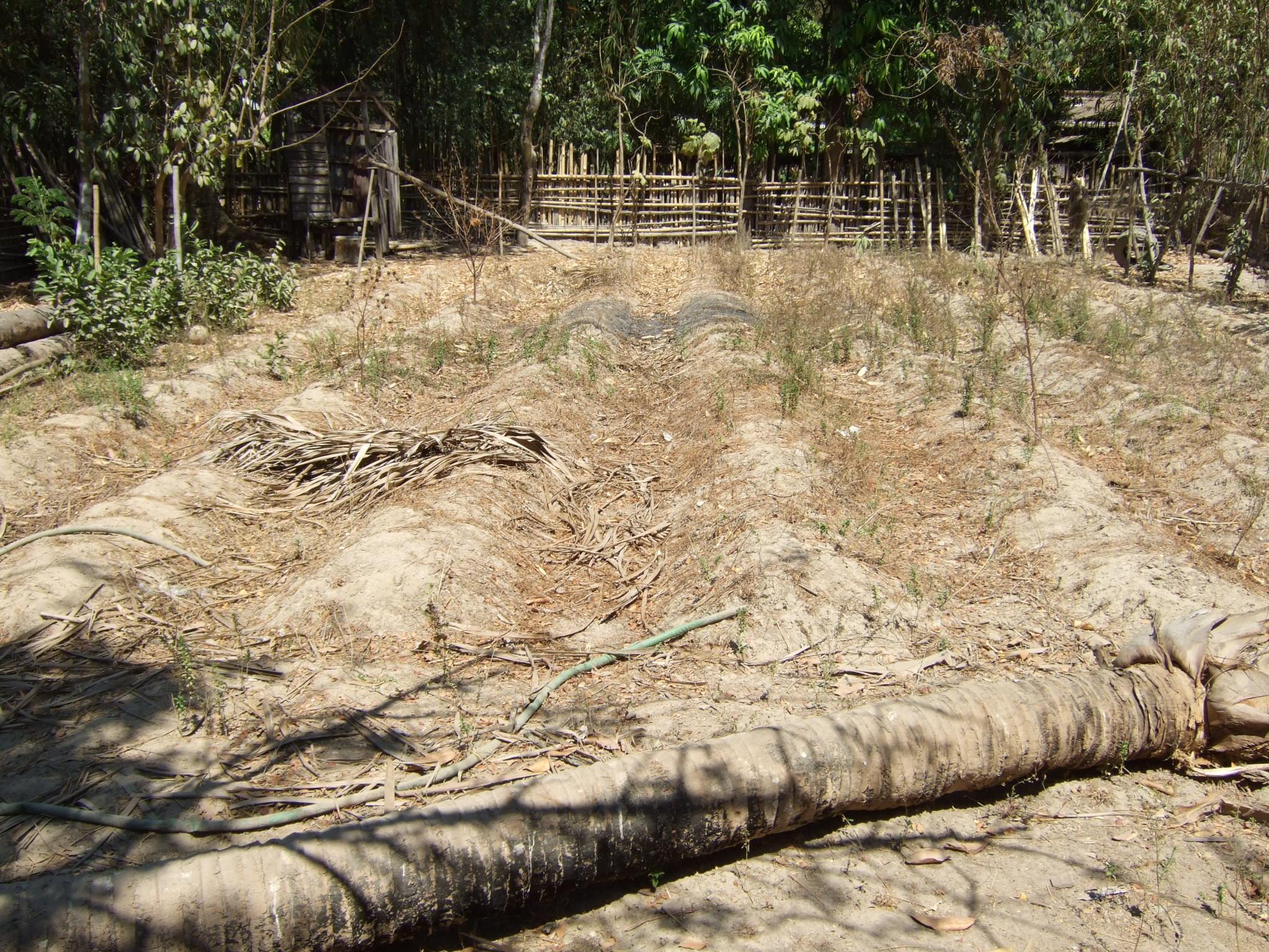 ミャンマーの畑(乾季)